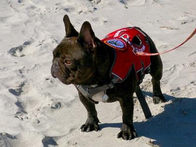 pes záchrannář