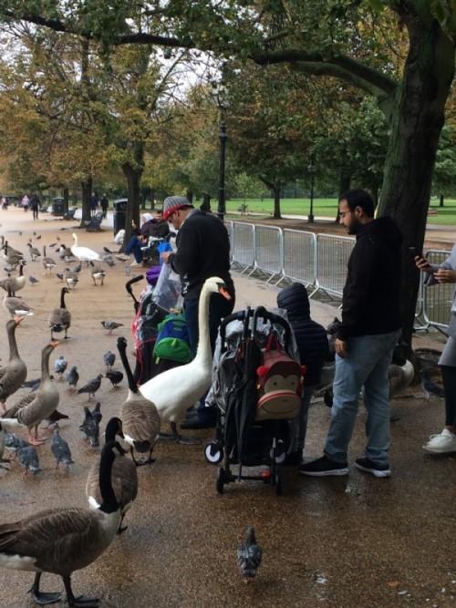 Zvěř v Hyde Parku