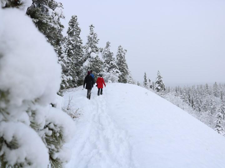 Na zimní procházce ve sněhu na Aljašce